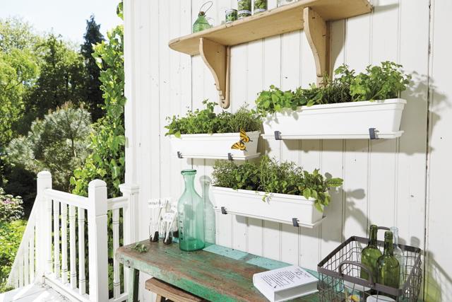 c9c7af4d9 Na výber máte z rôznych farebných možností – bielej, červenej alebo žltej.  Z okrasných rastlín sa na slnečnom balkóne bude dariť aj zvončekom, ...