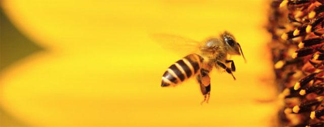 Hornet Zoznamka aplikácie